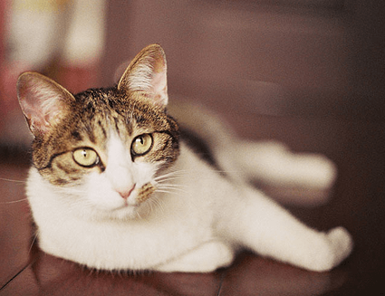 关于宠物app开发功能的需求